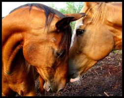 Pasturemates by WildFeathers