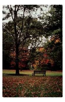 - the end of autumn - by mickeyzee