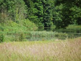Long grass and water by folipoo