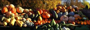 Pumkins and Melones... by MichiLauke