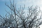 Branches Filled With Snow by Hitomii