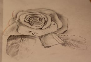 rosy rose by Janerd