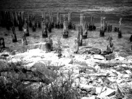 Abandoned Pilings by setmyfriendsonfire27