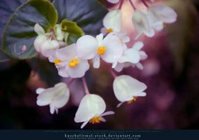 Small light Flowers by kuschelirmel-stock