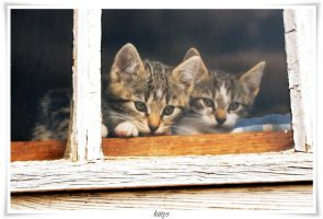 kittys by landscapesaxony