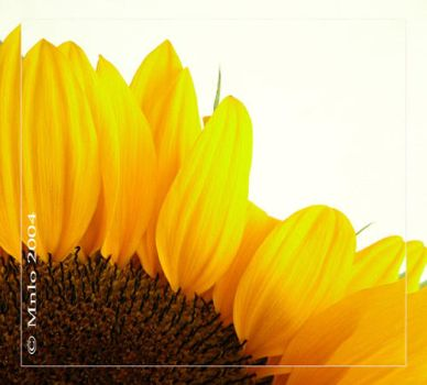 Yellow by Mnlo