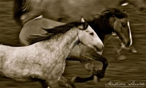 Rodeo by SnowPhotography