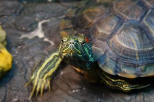 Turtle Nose by raverqueenage