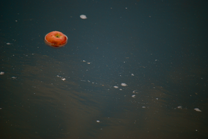 Bobbing for Apples by DapperTadpole