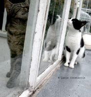 The love cats by LuciaConstantin