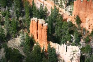 Trees in Bryce Canyon by Dr-J-Zoidberg