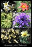 Flower Package vol 1 by Eirian-stock