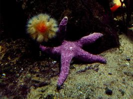 starfish and its friend by entartet