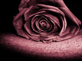 An Ugly Rose For An Ugly Girl by A-Strangers-Beauty