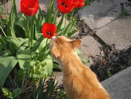 ~Stop And Smell The Tulips~ by KootiesMom
