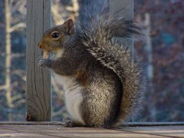 Squirrel 2 by bastherself