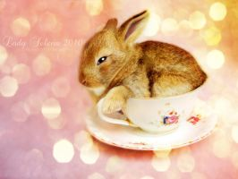 Cutie in a Cup by Susaleena