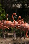 Flamingo's feeding by remyrob