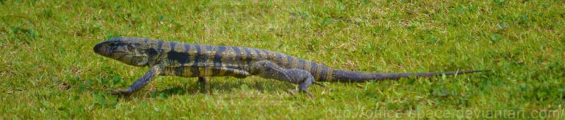 Spotted: Lizard by Office-Space