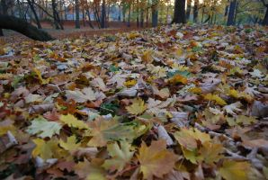 Leaves everywhere by Dorian-Gray7
