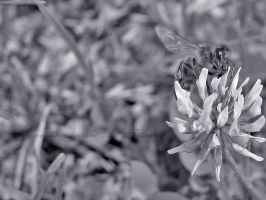 Busy Bee by Misantropia