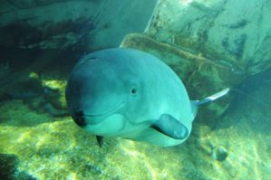 Meet Jack the Harbour Porpoise by greent