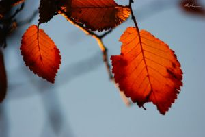 Red Leaves - I by BpRos3