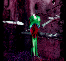 Blacklight Macaws by stacemyster