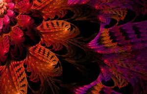 Feathers by csd0916