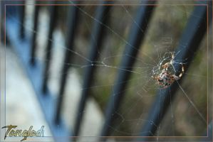 Oh What a Tangled Web.... by Snigom