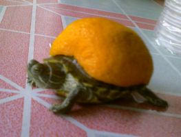 is it an orange or a turtle? by NovRoz