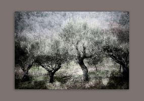 Olive trees by iram