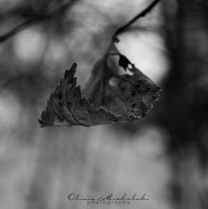 Withered Cradle. by `dragonfly-oli
