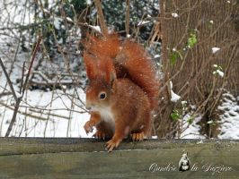 Squirrel 209 by Cundrie-la-Surziere