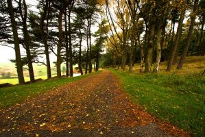 Autumnal Path by james-dolan
