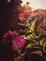 In Bloom by Urnewreality