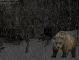 Bear. D: by FrustratedsDesigns