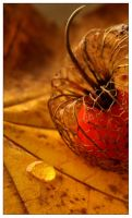 01 :: physalis by yatu-ex