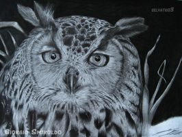Owl - Asio otus by selvatico3