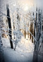 Narnia by d67