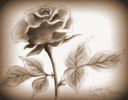 Rose - Rosa by natthan54