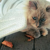 Cat by OhhSnappItsMegg