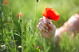 Reach for a poppy by JessyPhotography