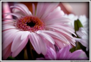 Even flowers cry by Emilie25
