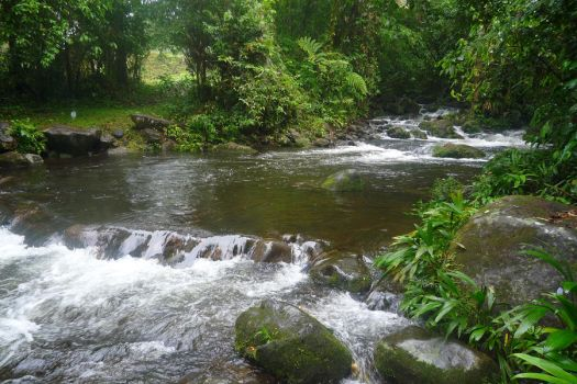 Rio Guapiles by SuAlmont