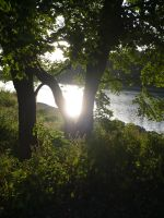 The sun through the tree by Vempje