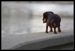 Lonely Puppy by DkL
