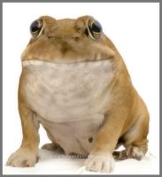 BullDogfrog by HumanDescent