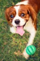 Here's Your Ball, Where's My Treat? by alexgphoto