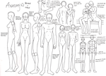 Anatomy by zoro4me3